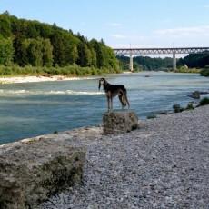 In München mit Hund