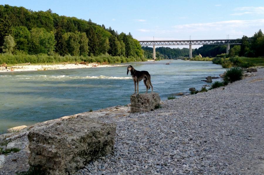 Mit Hund an der Isar in München